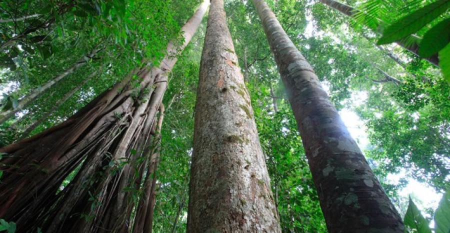 RDC: Le président Tshisekedi appelle à plus d'attentions pour le bassin du Congo au même titre que l'Amazonie.