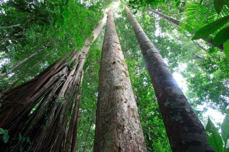 Forêt: Greenpeace Afrique demande à la ministre Bazaiba de faire respecter le moratoire sur les nouvelles concessions forestières industrielles violé sans scrupules