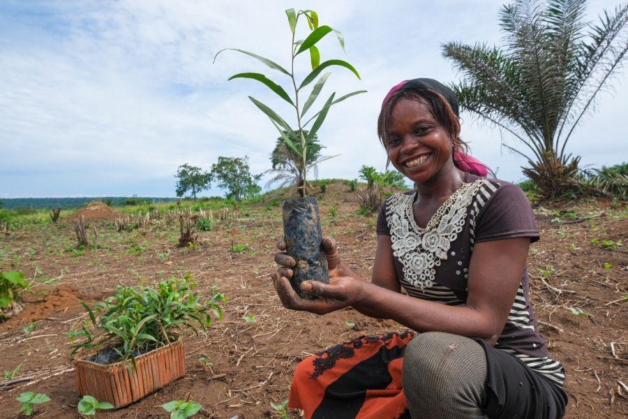 Tshopo/Yangambi: Des organisations environnementales restaurent des forêts en plantant un million d'arbres