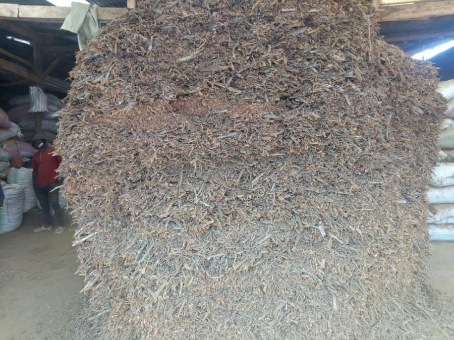 Lubero: Baisse du prix du quinquina sur le marché, les agriculteurs abandonnent la culture