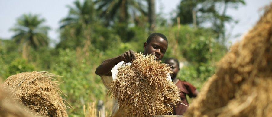 Désertification en Afrique : la Banque mondiale prévoit d'investir plus de 5 milliards de dollars