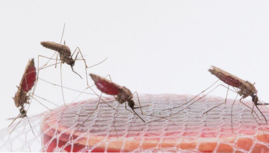 Un nouvel outil dans l'arsenal de lutte contre le paludisme