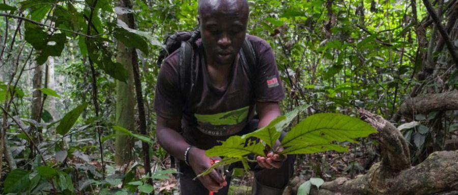 Les forêts sont-elles la réponse à l'avenir incertain du café ?
