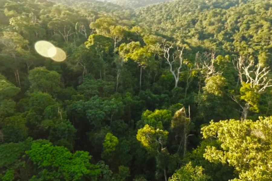 Forêts : Mise en application de l'édit 002 sur le droit à la jouissance des femmes, un défi pour l'ONG OCEAN