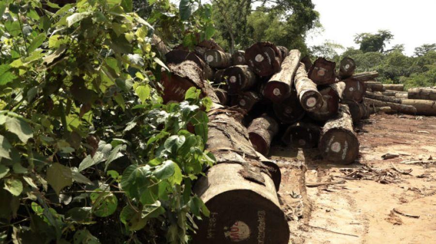 Forêt : La SOCIPEQ exige le départ immédiat et définitif de Maniema Union 2 de la province de l'Equateur