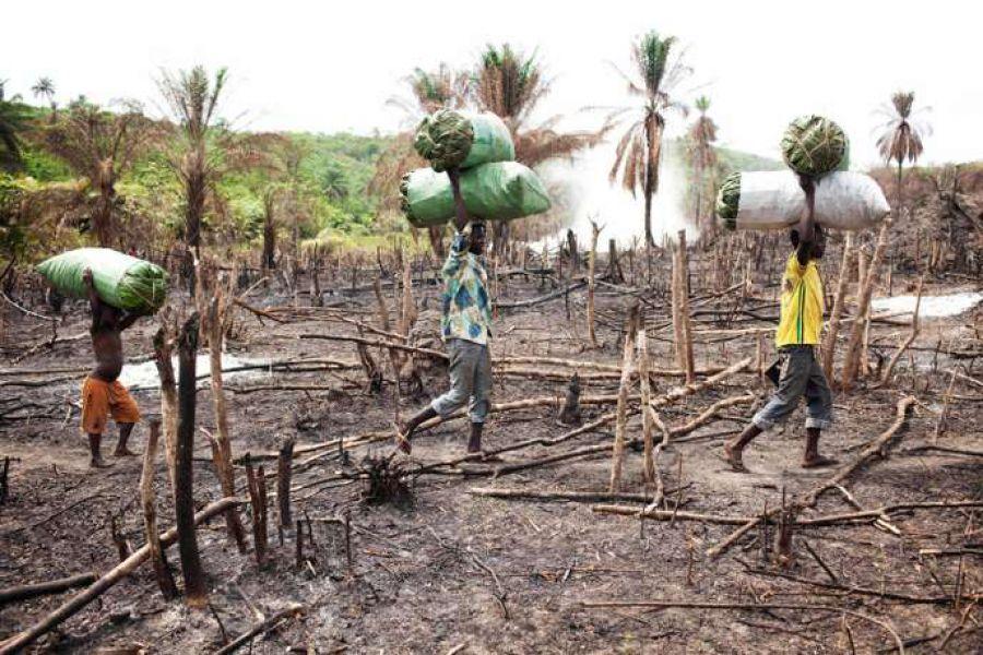 Des risques d'extinction planent sur un tiers de la flore tropicale africaine