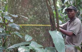 Les forêts tropicales d'Afrique sont les plus résistantes à la sécheresse