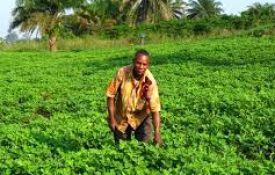 Le potentiel agricole de la RDC : une question de volonté politique