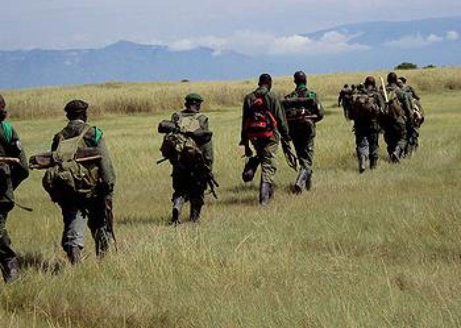 Beni : l'ICCN rejette les allégations d'approvisionnent des rebelles de l'ADF par ses gares-parcs