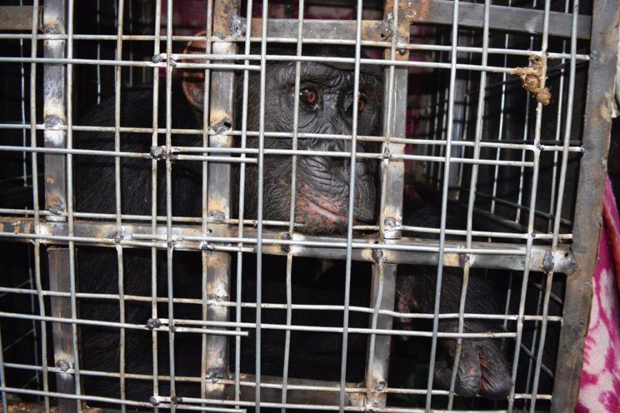 Journée mondiale des espèces menacées: le trafic des animaux sauvages menace l'humanité