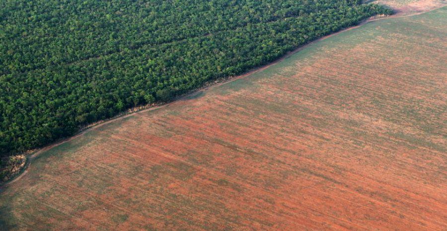Evaluation mondiale des forêts : L'Afrique a la plus forte perte de superficie forestière