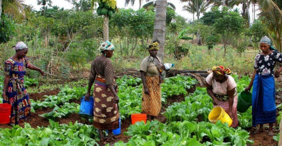 Blog: Femme rurale congolaise : tu mérites notre respect !