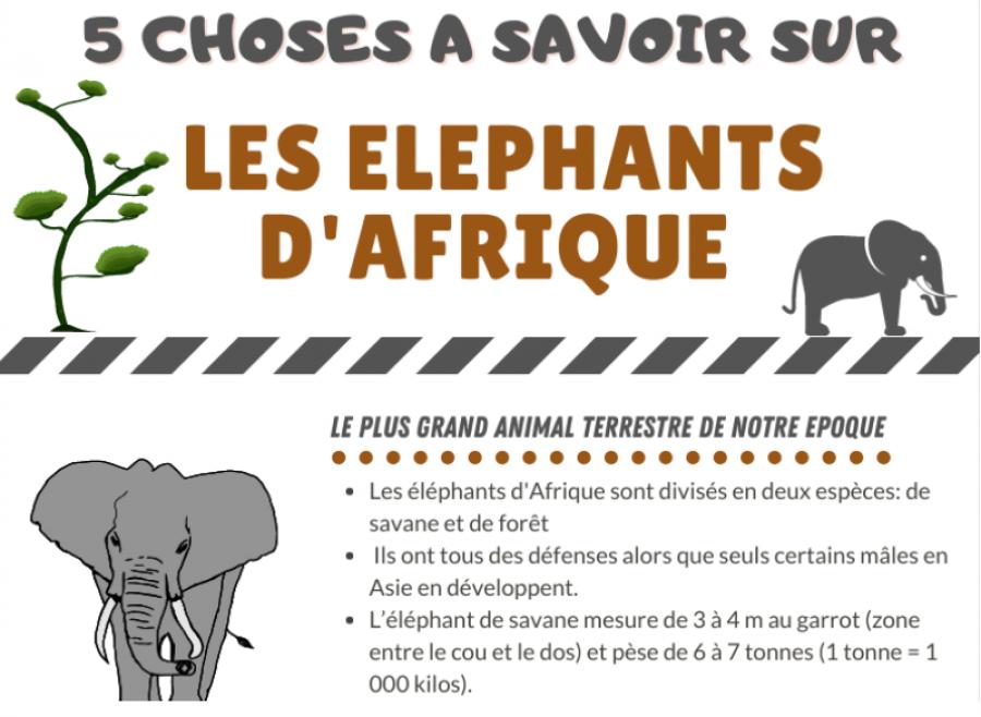 5 choses à savoir sur les éléphants d'Afrique