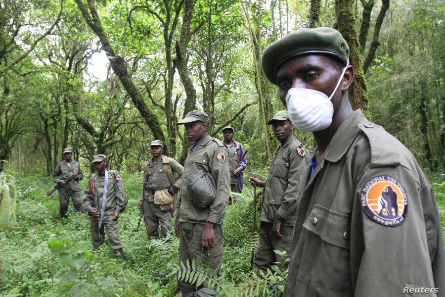 e parc national des Virunga fait souvent l'objet d'attaques meurtrières de ces travailleurs et de la population environnantes.