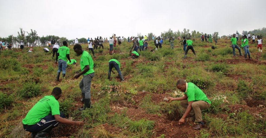 Science must back initiatives to restore Africa's forests, say experts