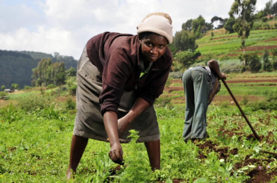 Journée internationale de la femme rurale : La FAO  favorise l'accès à l'épargne en RDC