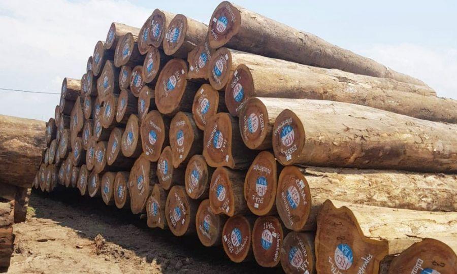"""Blog: Exportation de bois d'œuvre sous forme de """"grume"""" en RDC : Règle ou exception ?"""