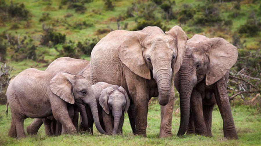 RDC : ICCN Grand-Katanga forme 73 éco-gardes du Parc National de l'Upemba