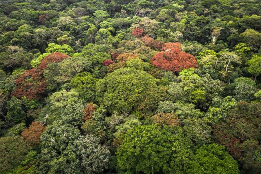 Less than half of world's humid tropical forests have high ecological integrity: Study