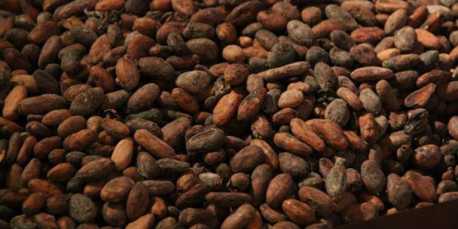 Côte d'Ivoire : Lancement de la construction de deux usines de transformation de cacao